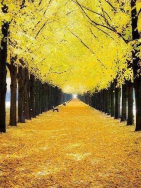 golden walkway, hanover germany.png