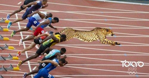 cheetah-olympics.jpg